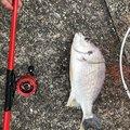りっつさんの高知県香南市での釣果写真
