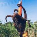 ねこまつさんのマダコの釣果写真