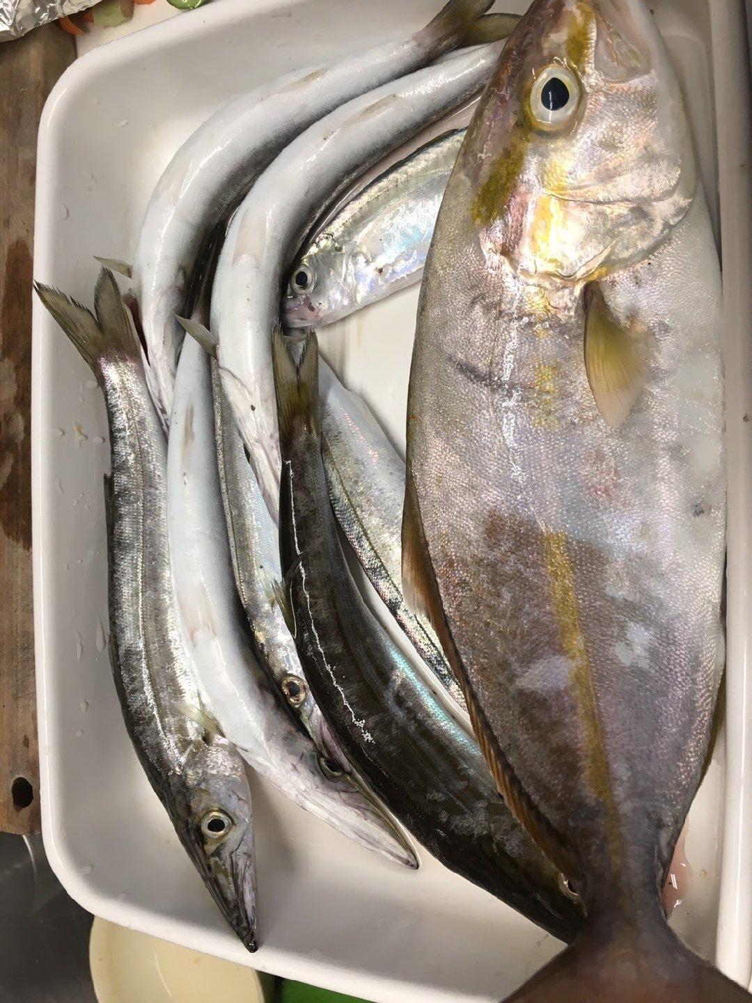 裏拳さんの投稿画像,写っている魚は