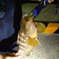 にっしーさんの長崎県での釣果写真