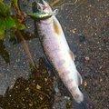ノイトラさんの栃木県日光市での釣果写真