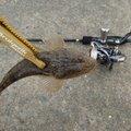 神経痛マンさんの静岡県掛川市での釣果写真