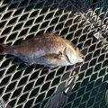 こーへーさんの奈良県での釣果写真
