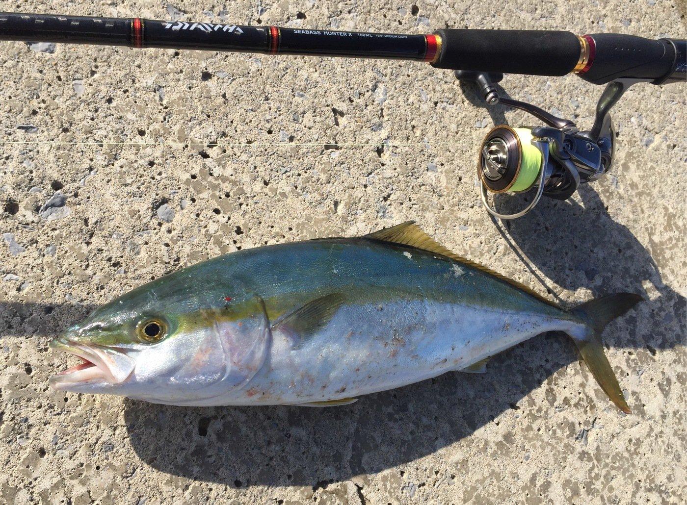 れんさんの投稿画像,写っている魚はブリ