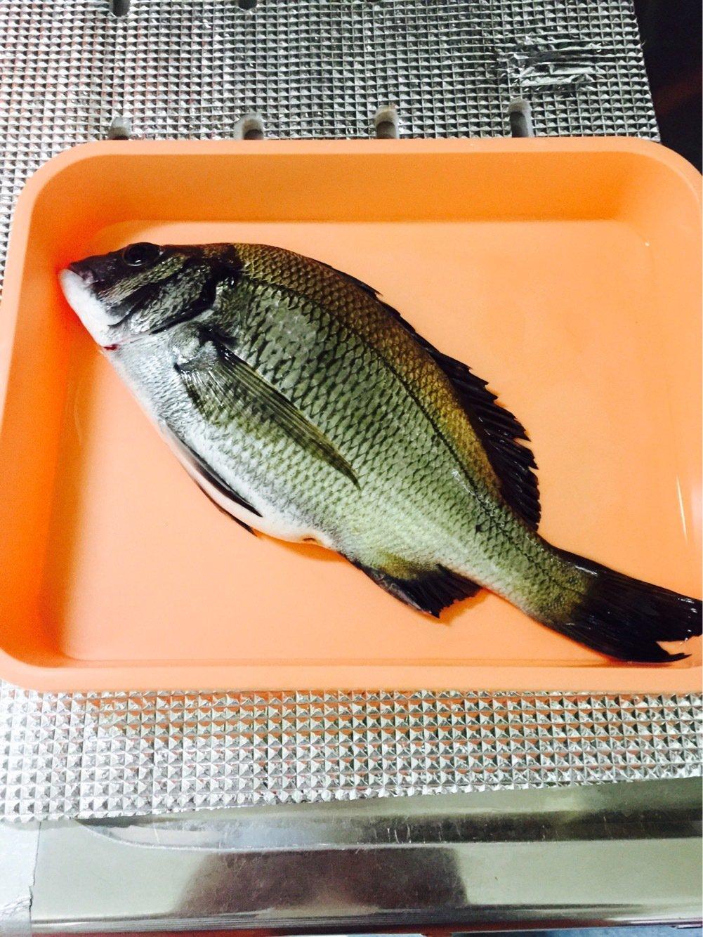 ひでたんさんの投稿画像,写っている魚はクロダイ