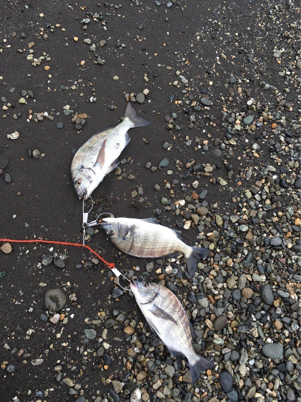 拓さんの投稿画像,写っている魚はクロダイ