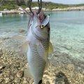 ハチさんの沖縄県での釣果写真