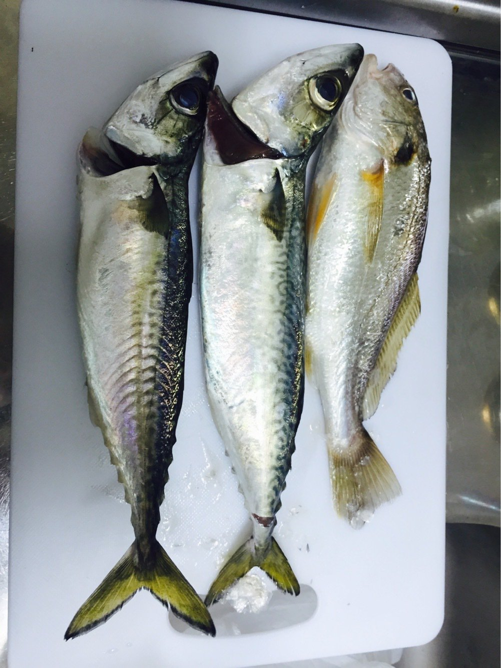 .Kさんの投稿画像,写っている魚はゴマサバ