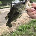 タークボさんの茨城県稲敷市での釣果写真