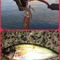 kskさんの香川県での釣果写真