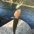 mt.squareさんの佐賀県唐津市での釣果写真