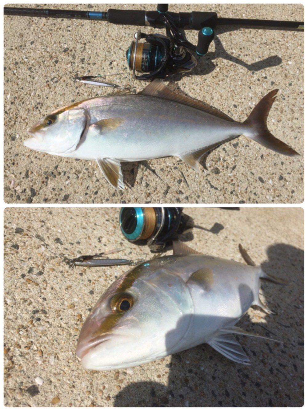 jive850さんの投稿画像,写っている魚はカンパチ