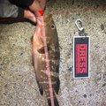 がきさんの山形県での釣果写真