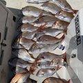 てっぺんさんの香川県での釣果写真
