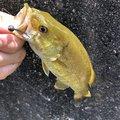 草リグさんの埼玉県での釣果写真