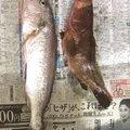 Kazu kenさんの佐賀県武雄市での釣果写真