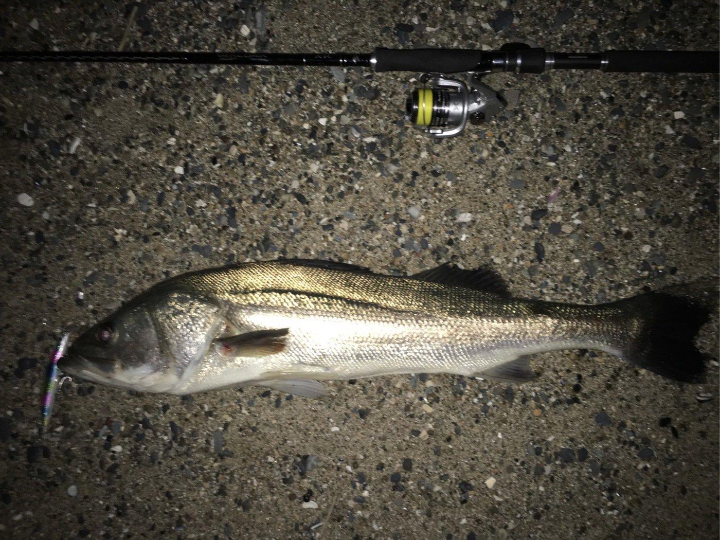 百姓漁師さんの投稿画像,写っている魚はスズキ