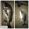 ナオキさんの兵庫県伊丹市での釣果写真