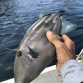 シロウさんの長崎県での釣果写真