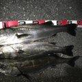 ハニ男さんの富山県富山市での釣果写真