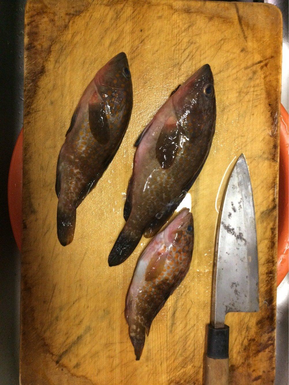 てっちゃんさんの投稿画像,写っている魚はキジハタ