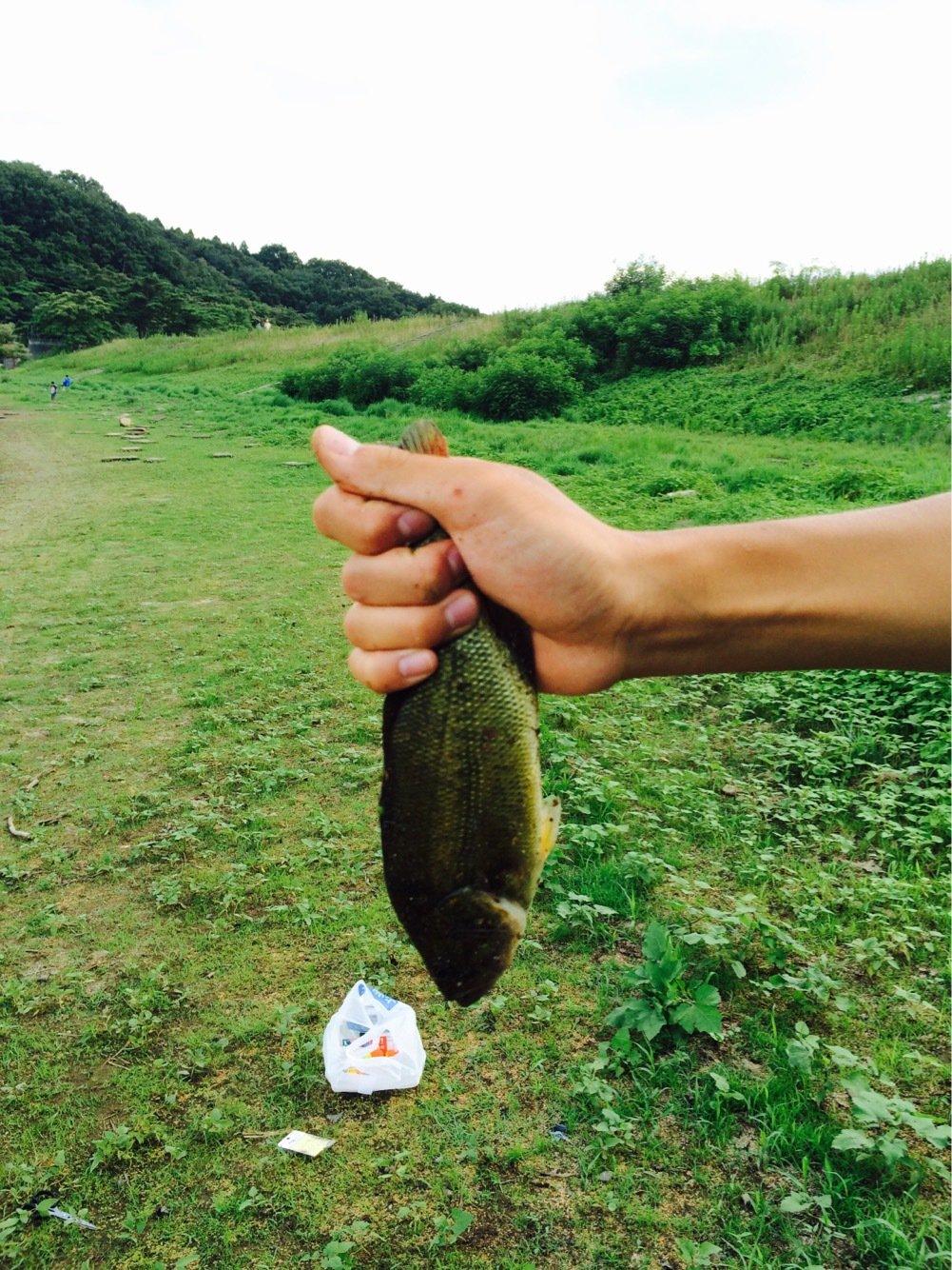 APOLLOさんの投稿画像,写っている魚は