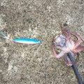 しげさんの山形県での釣果写真