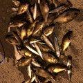 chodaさんのヒラメの釣果写真