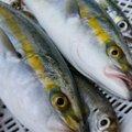 ✿美海✿さんのブリの釣果写真