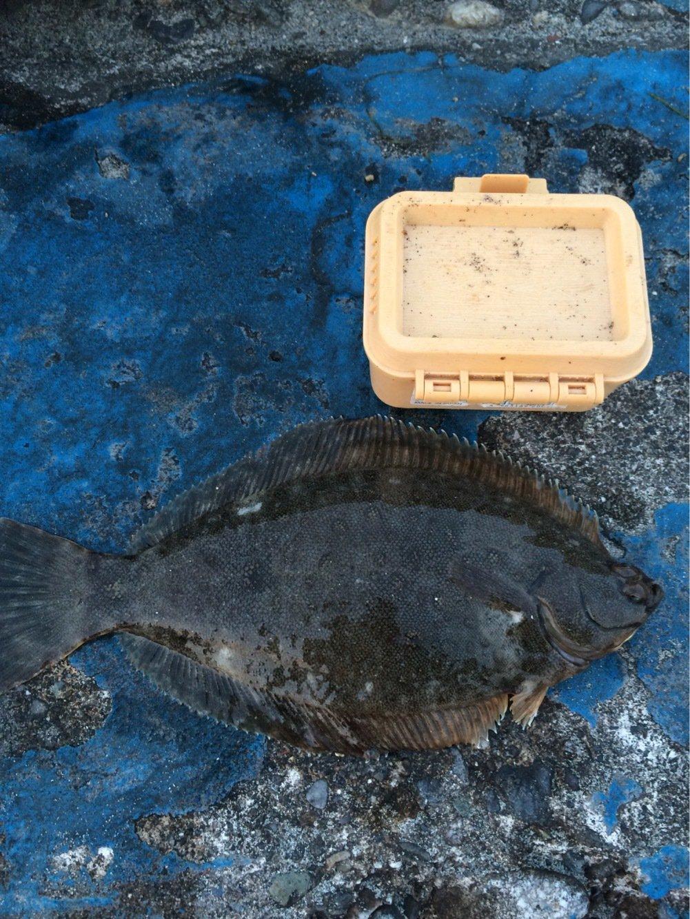 アムさんの投稿画像,写っている魚はカレイ