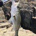 釣り初心者さんの兵庫県たつの市での釣果写真