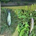 まひとんさんの茨城県潮来市での釣果写真