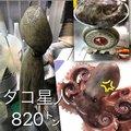 keikichiさんのマダコの釣果写真