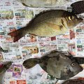 keisukeさんの長崎県での釣果写真