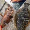kaito@さんのヒラメの釣果写真