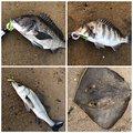 TAIKIさんの広島県でのクロダイの釣果写真