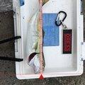 gabriaさんのブリの釣果写真