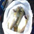 ヒロぽんぽんさんの千葉県館山市での釣果写真
