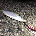 サラリーマン釣り太郎@幻影魚団さんの福岡県でのアジの釣果写真