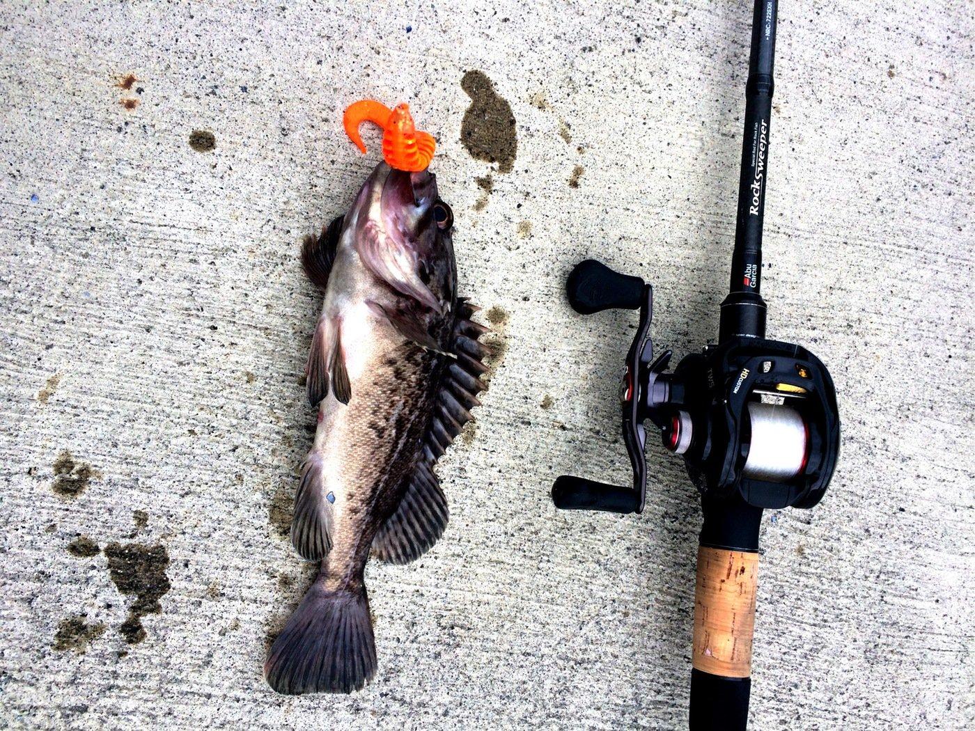 takasixさんの投稿画像,写っている魚はクロソイ
