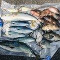 望月暁さんの千葉県での釣果写真