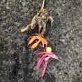 soldier fishさんの愛媛県松山市でのマダコの釣果写真