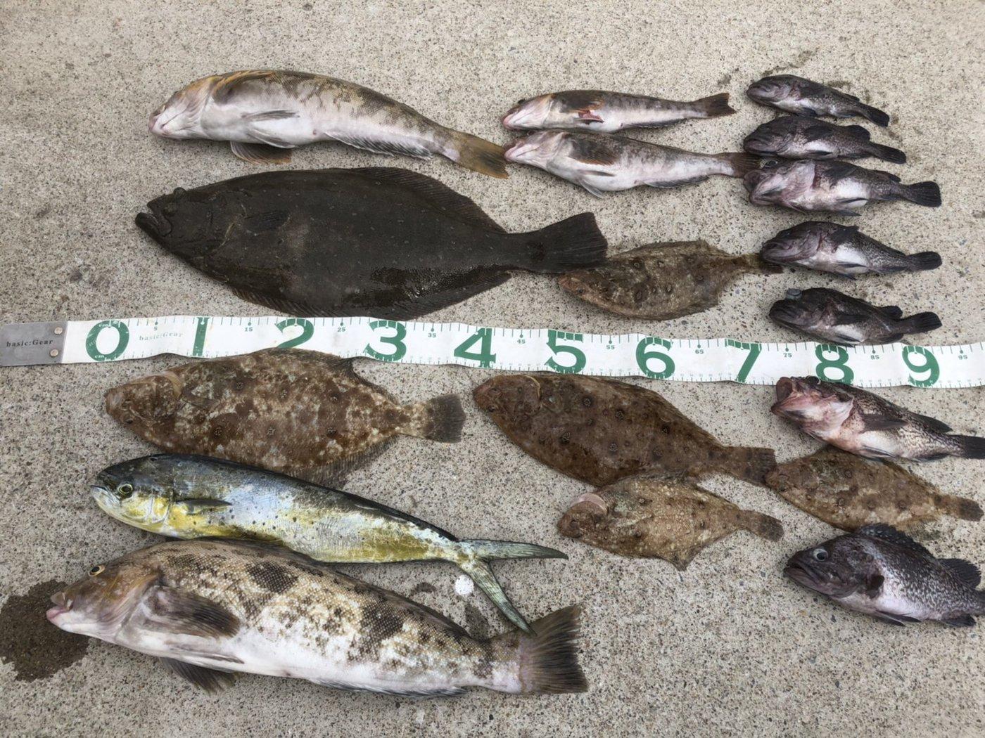 FREESTYLE(おーみ)さんの投稿画像,写っている魚はアイナメ,シイラ,ヒラメ,キツネメバル,ムシガレイ