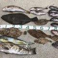 FREESTYLE(おーみ)さんのキツネメバルの釣果写真