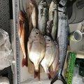 山崎 克彦さんのイトヨリダイの釣果写真