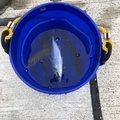 な〜がさんの茨城県日立市での釣果写真