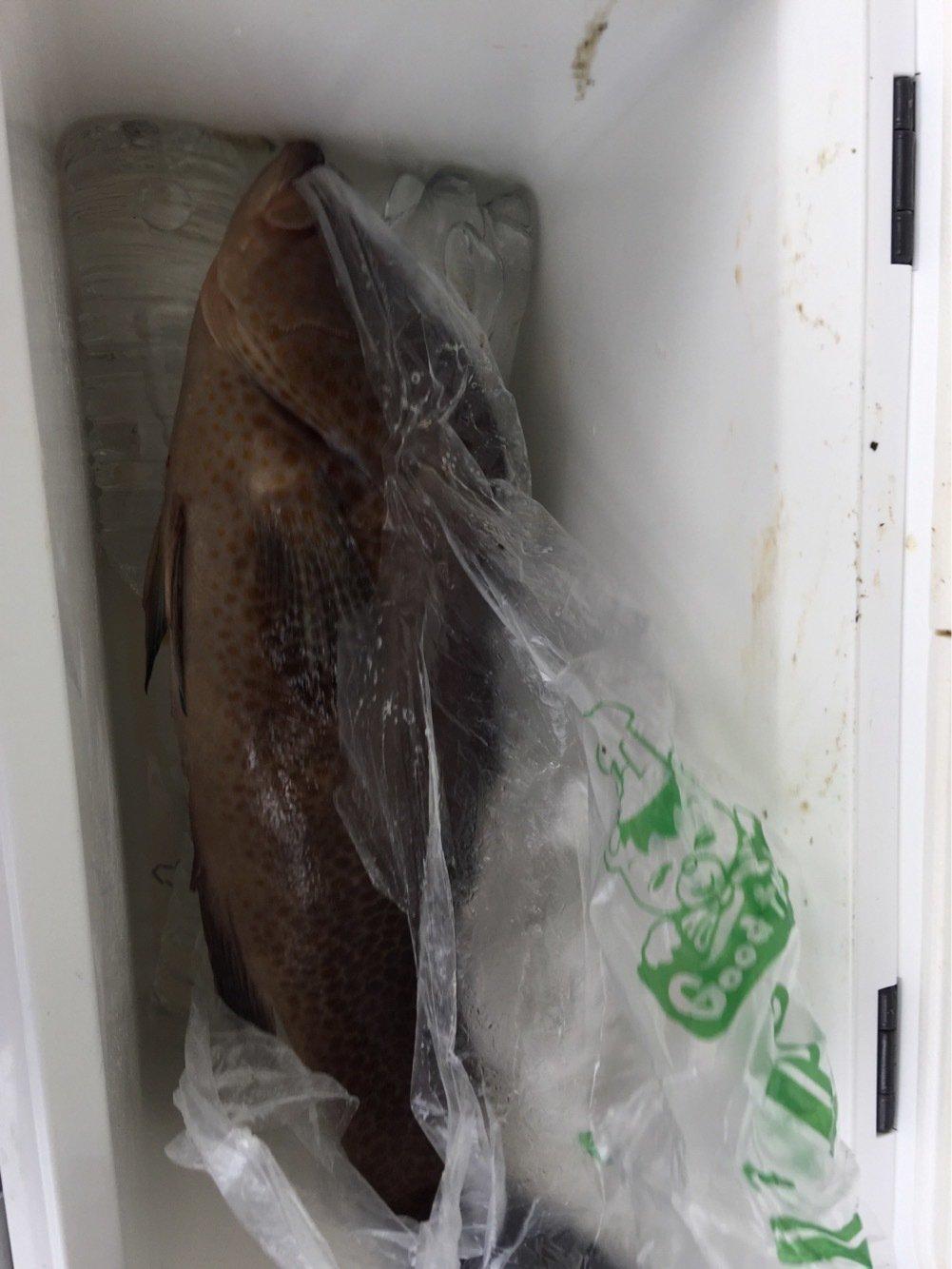 成那凜空パパさんの投稿画像,写っている魚はオオモンハタ