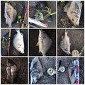 赤眼のあきと(REV)さんの千葉県での釣果写真