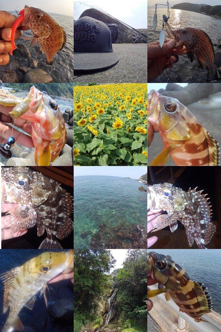 KRO さんの投稿画像,写っている魚はカサゴ,フエフキダイ,オオモンハタ,アカハタ