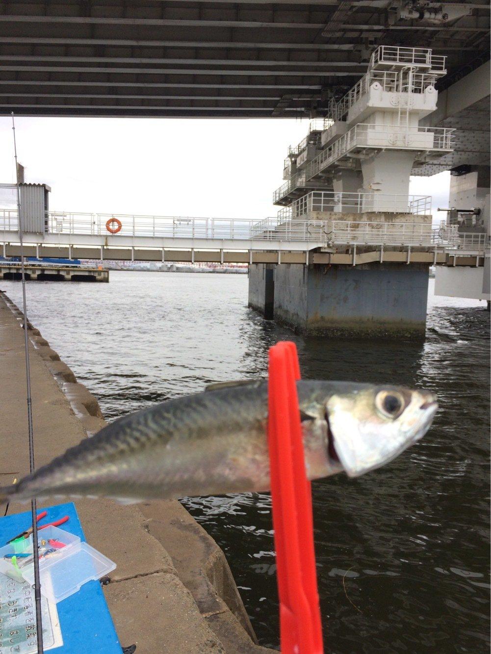 れいじパパさんの投稿画像,写っている魚はマサバ